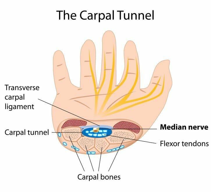 Anatomy of the Hand